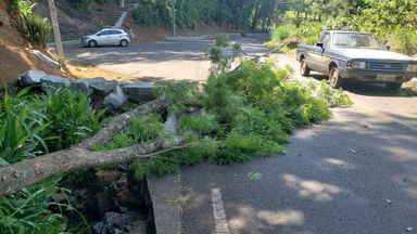 Queda de árvore provoca apagão em bairros de Joaçaba