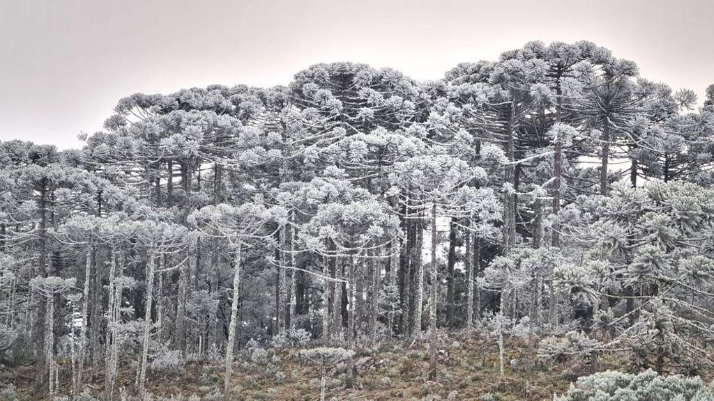 SC registra temperaturas negativas e sincelo nesta segunda-feira