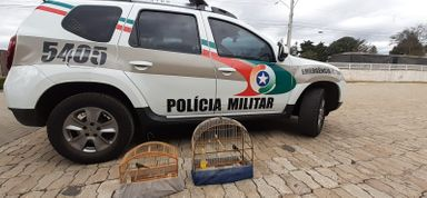 PM apreende pássaros silvestres em bairro de Joaçaba