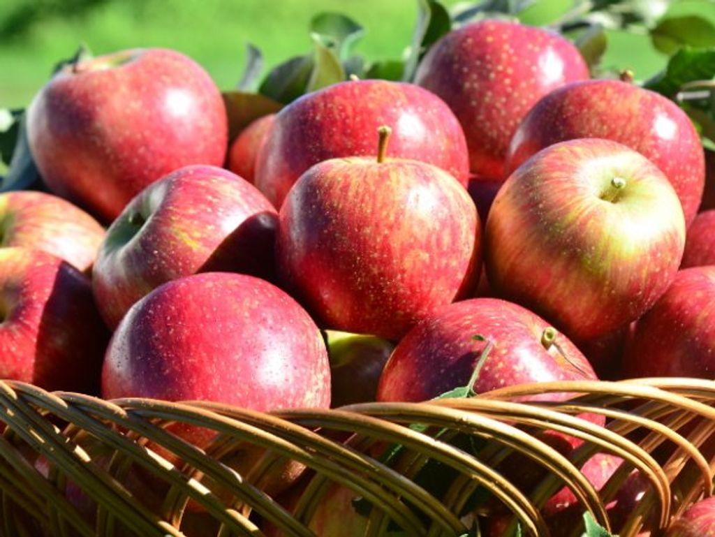 Com a maçã Fuji, Santa Catarina conquista sua sexta Indicação Geográfica