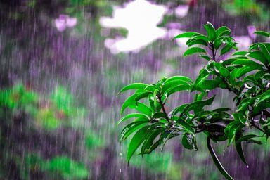 Semana com ar úmido e abafado com chuva frequente em SC