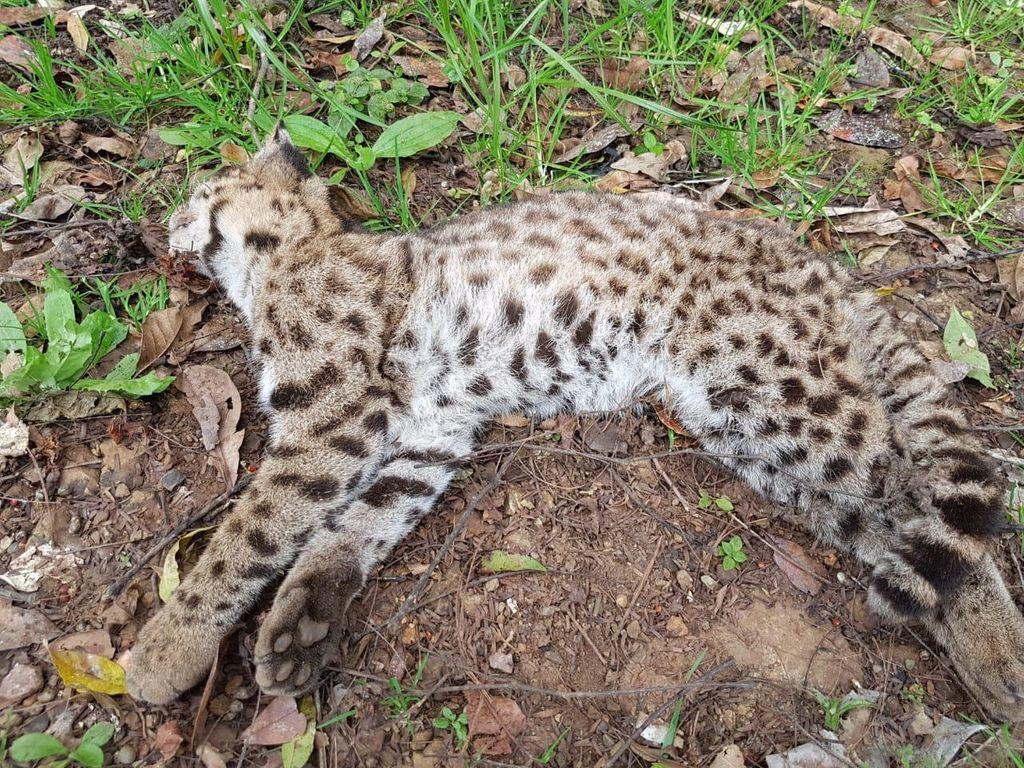 Fotos enviadas pela família Padova mostram o felino.