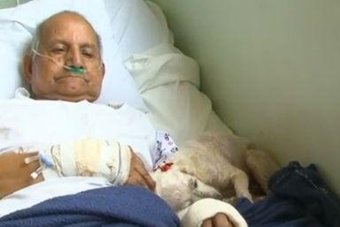 Cadela visita dono, de 84 anos, internado em hospital de Guarapuava, no Paraná