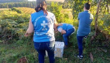 Equipe da Vigilância Epidemiológica no local onde o macaco foi encontrado