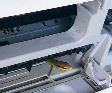 Morador do RS encontra cobra em impressora dentro da própria residência