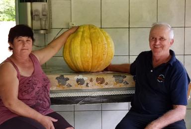 Casal colhe moranga de 29kg