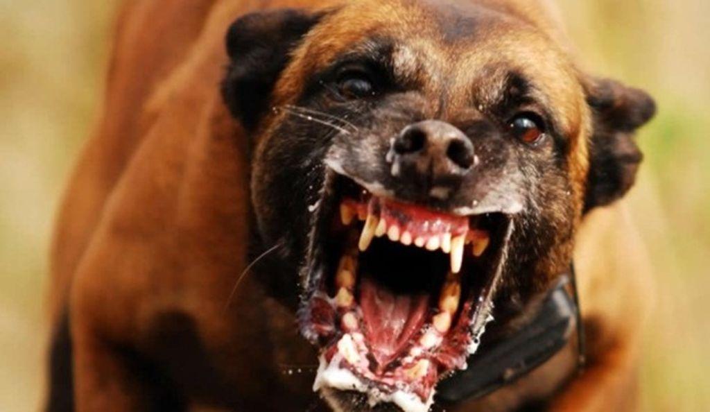 raiva canina en humanos sintomas de diabetes