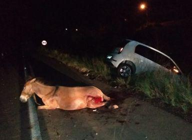 Perigo na estrada! Cavalo na pista provoca acidente na BR-282