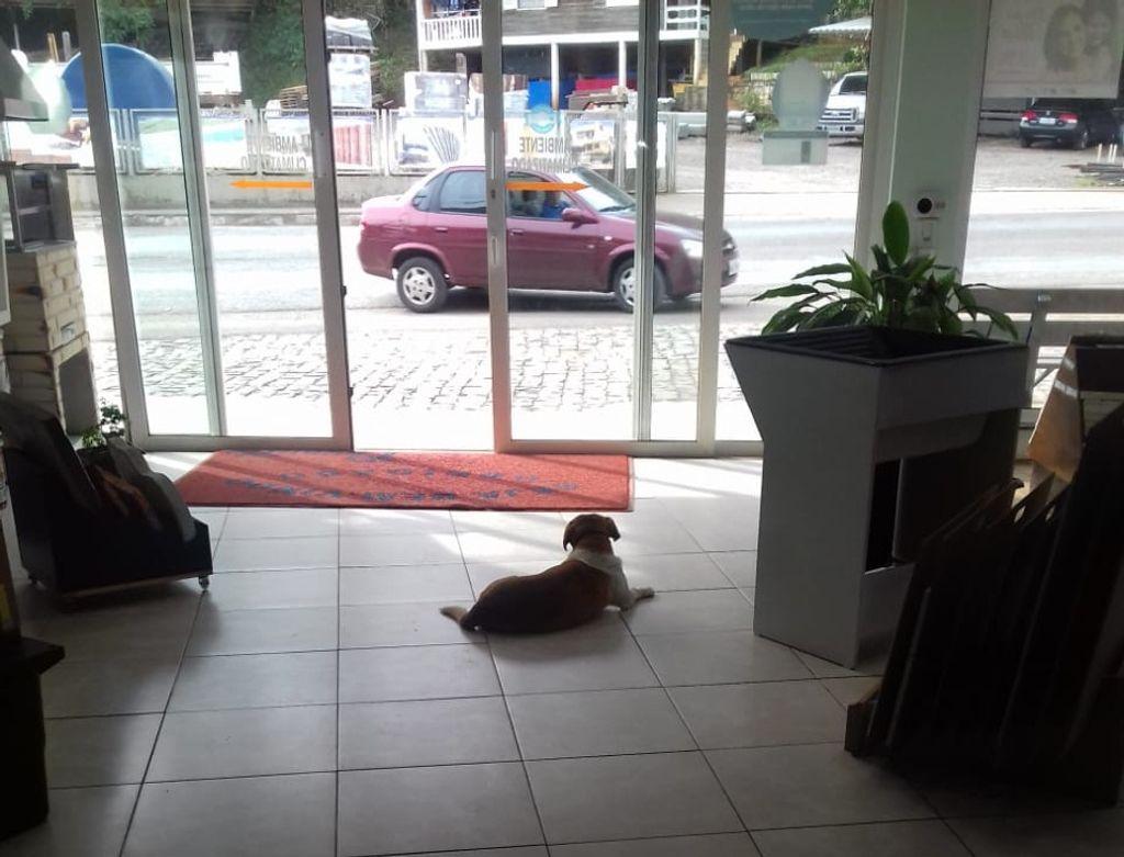 Marquito dentro da loja à espera dos clientes.