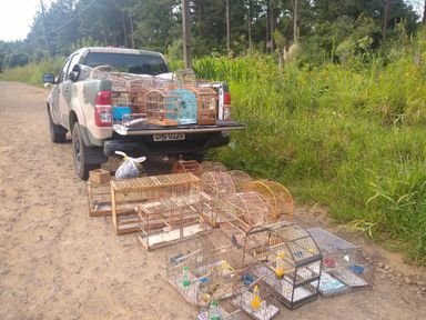 Polícia Militar Ambiental apreende 40 pássaros silvestres mantidos em cativeiro irregular