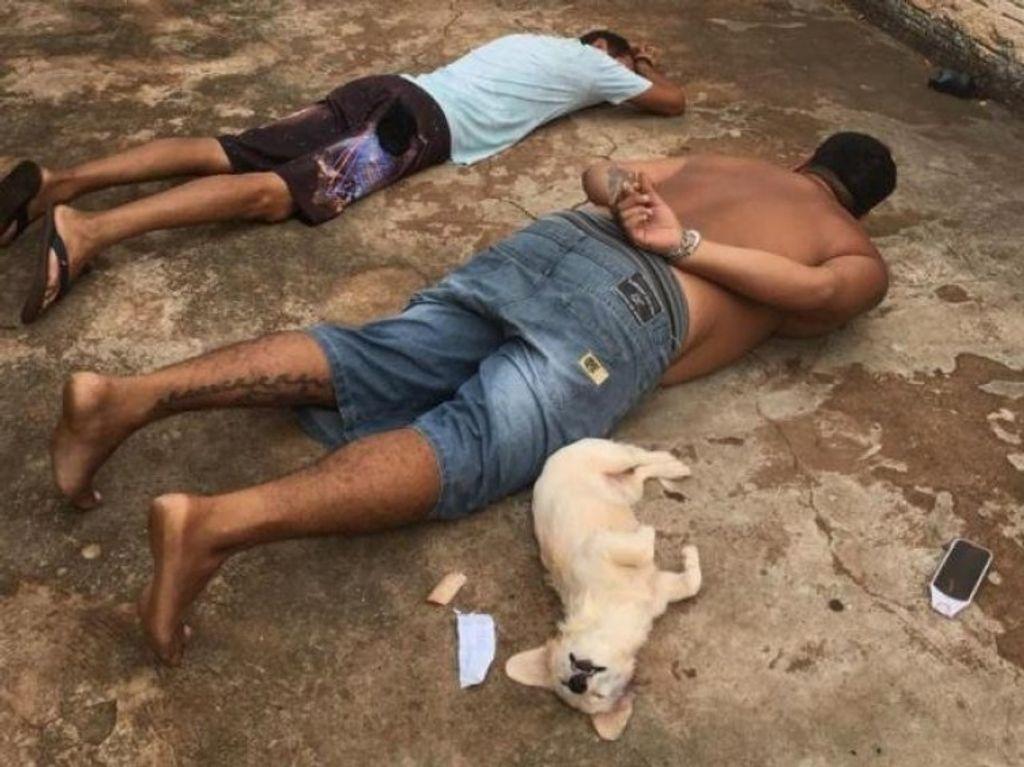 """A cachorrinha que acompanhava um dos traficantes também """"se entregou"""" para a polícia depois que os homens deitaram no chão. Foto: Divulgação"""