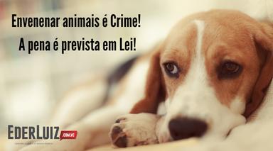 Crueldade! comunidade denuncia mortes de animais domésticos por envenenamento em Joaçaba e Herval