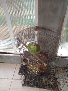 Pássaros mantidos em cativeiro são apreendidos pela PM Ambiental