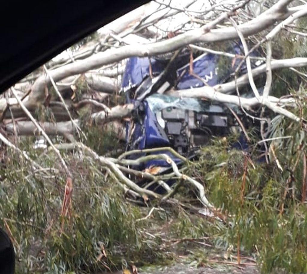Caminhão é atingido por árvore que foi arrancada pelo vento na BR-153