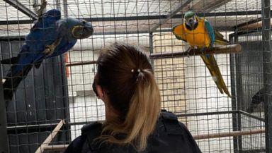 Operação de combate ao tráfico de animais silvestres cumpre mandados em SC, SP e RS