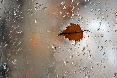 O que esperar da chuva do outono de 2020?
