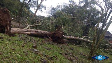 Árvores foram arrancadas pelo vento