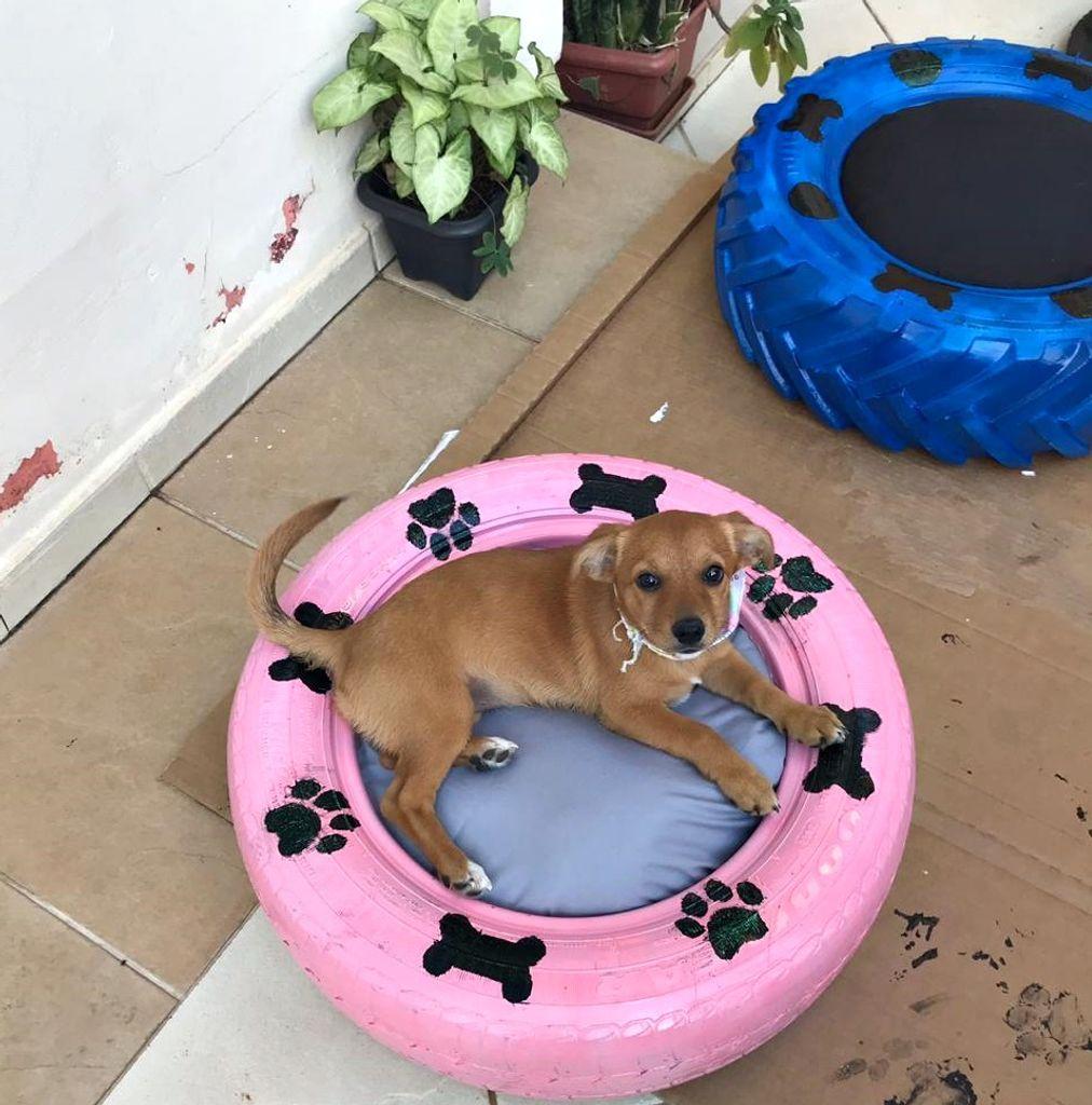 Boa ideia! Voluntárias criam caminhas para cachorros com pneus usados