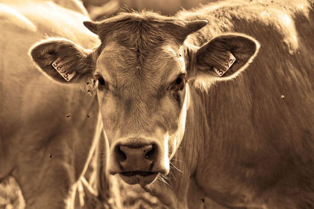 Vaca louca: governo confirma casos no Brasil e exportação de carne é suspensa